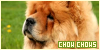 Dogs: Chow chows: